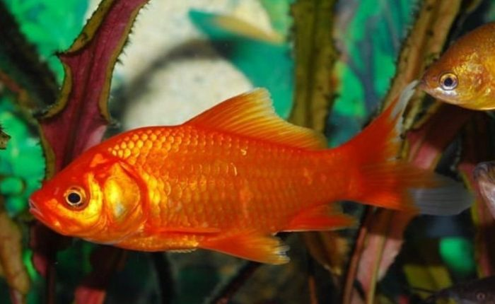 Tipos de peces